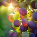 vino-italia-primo-produttore-mondo