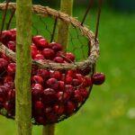 cosa si può fare con i noccioli di ciliegia